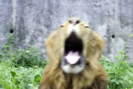 20060817-lion.jpg