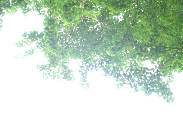 20070524-it.jpg