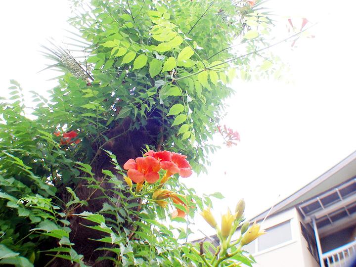 20070720-yu.jpg